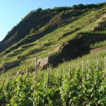 Weingut Heymann- Löwenstein Schieferterrasse