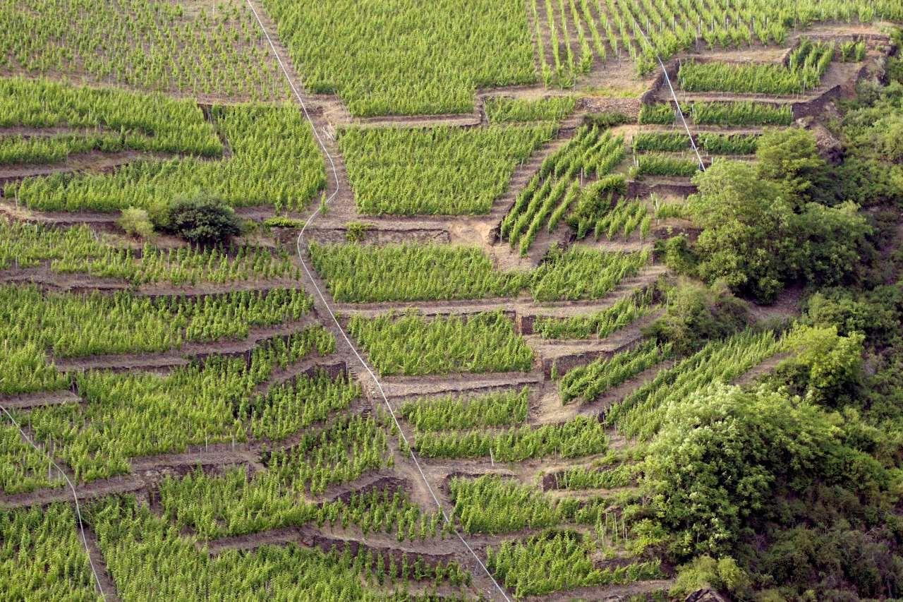 Weingut Lubentiushof Steillagen Weinbau Mosel