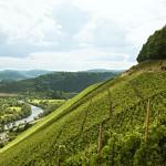 Weingut von Othegraven - eine der größten Steillagen Europas