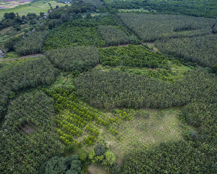 Luftbild einiger Flächen des Aufforstungsprojekts